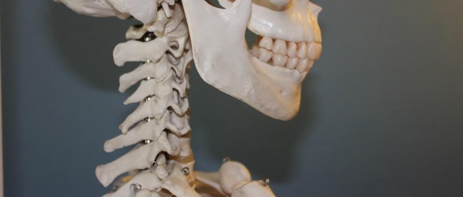 skull-778075_1920 2